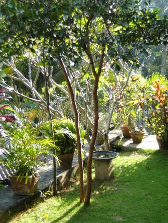 Villa 49: Jardin