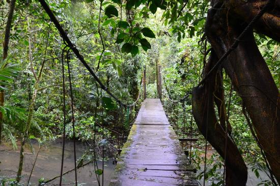 Tenorio National Park: een hangbrug in het park
