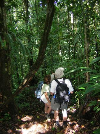 Campanario Biological Station: hiking in the forest
