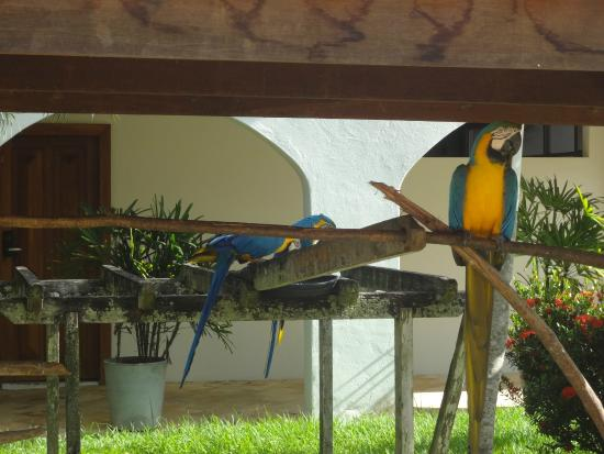 Hotel La Dolce Vita: Araras