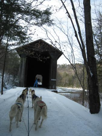 Braeburn Siberians: Covered bridge on the trail along the river