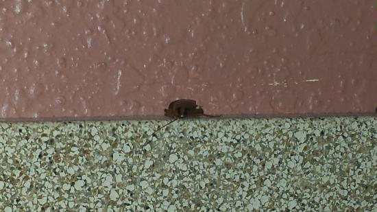Days Inn Fort Lauderdale-Oakland Park Airport North: roaches watching me sleep