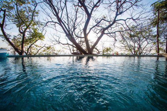 Gumbo Limbo Villas: Our beautiful infinity pool