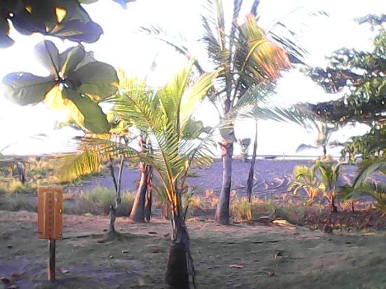 Hotel Las Olas Beach Resort: View From our Room Las Olas