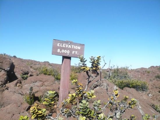 Volcano, HI: Elevation: 8000 ft.