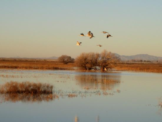 Willcox Playa Wildlife Area: Whitewater Draw at sunset