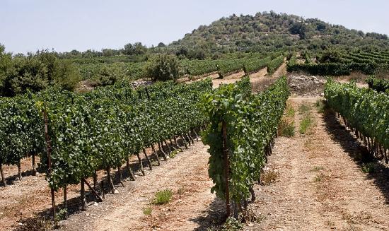 Tzuba Winery