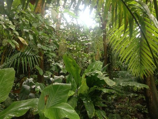 Ökologisch-Botanischer Garten