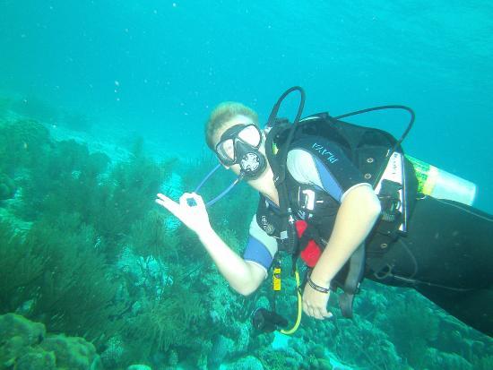 Blue Divers Resort: de mooie onderwaterwereld van bonaire