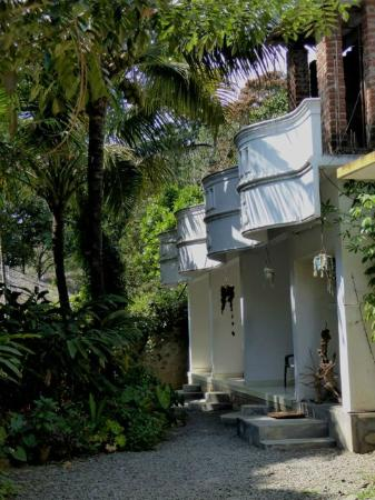 Bougainvilla: Garden and small balcony