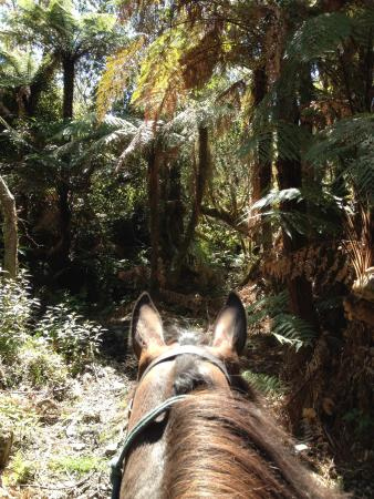 Glacier Country Horses : The beautiful West Coast rainforest.