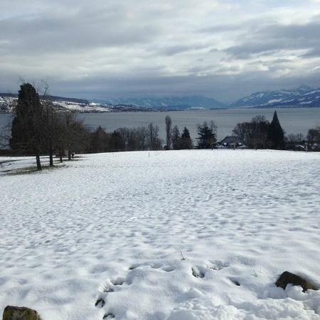 Landgasthof Halbinsel Au : Aussicht von der Terrasse des Landgasthofs Halbinsel Au