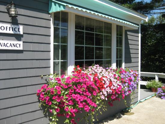 Mid-Town Motel: Beautiful Window Boxes