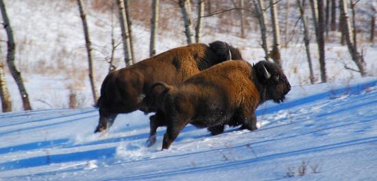Edmonton, Canada: Elk Island