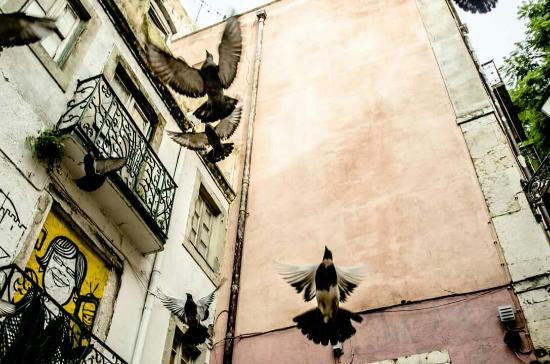 Alfama: Lissabon - Tauben in der Altstadt