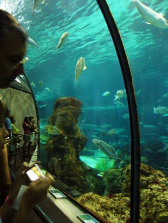 Charmants petits hippocampes picture of l aquarium de for Aquarium de barcelona