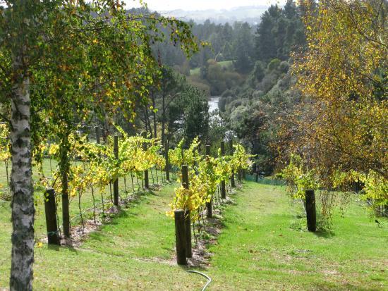 Rive Gauche B&B Lodge: Vineyard and river views