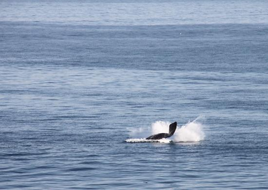Die Rotse Host House Self-Catering Accommodation: Whale watching from June to October