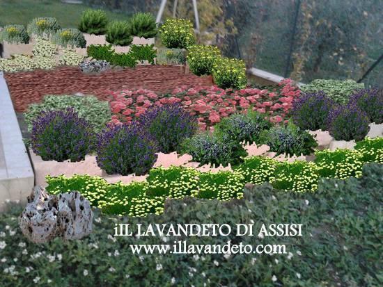 Progetti giardini gratis esempio aiuola con piante aromatiche