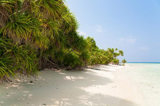 Hangnaameedhoo Island: Hangnaameedhoo Beach
