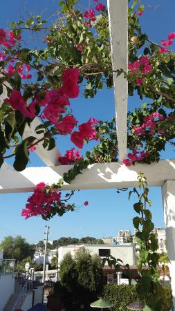 Paradise Apart Hotel: flowers on the terrace