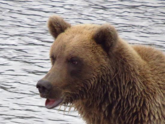 Great Alaska Adventures : The intense look of a hungry fisherman!
