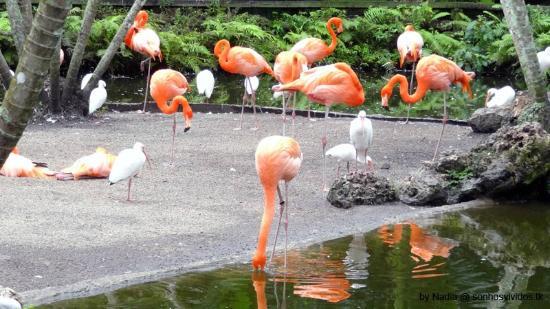 Flamingo Park