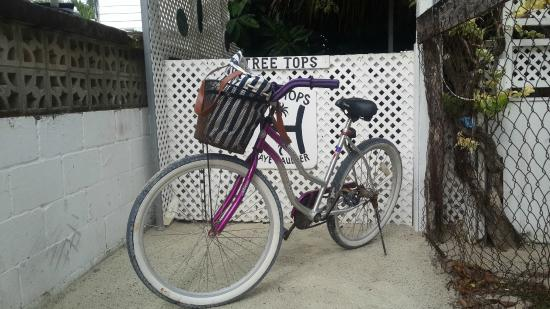 Tree Tops Guesthouse: Bikes to rent