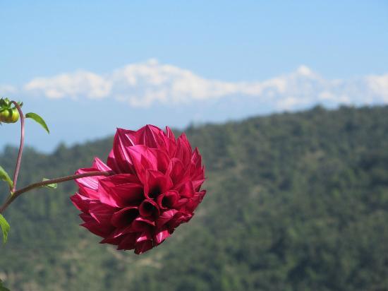 Khirsu Village : beauty of Khirsu