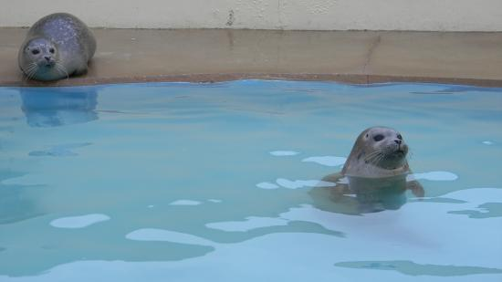 seal pool - Picture of Natureland Seal Sanctuary, Skegness ...