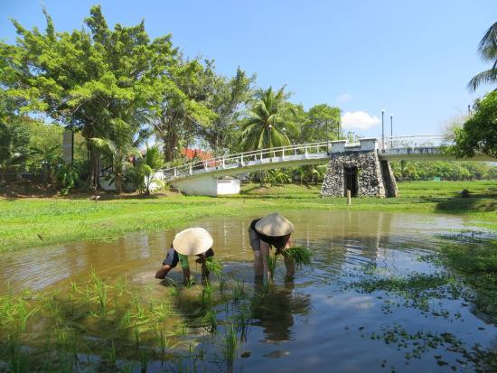 Rice Museum: Reis selbst anpflanzen
