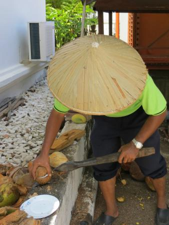 Rice Museum: Kokosnuss