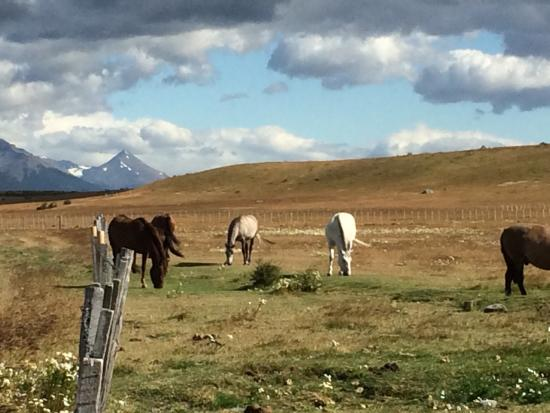 Bories House Hotel : Horses at Bories