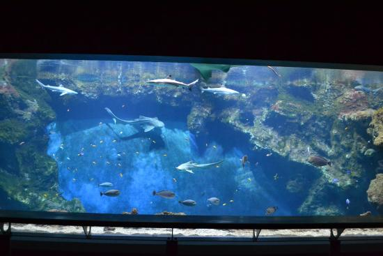 parete acquario foto di aquarium de lyon lione tripadvisor