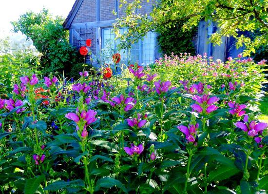 Topsmead State Forest: Garden