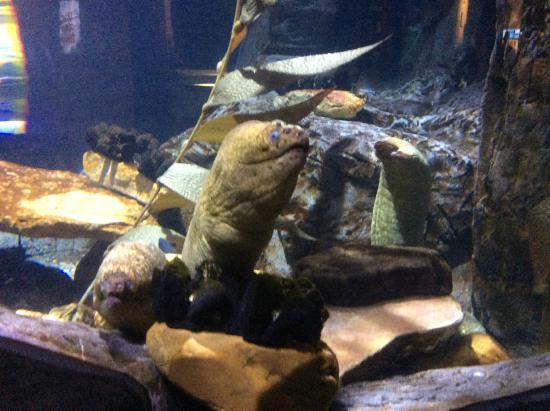 Moray Eels Picture Of Audubon Aquarium Of The Americas