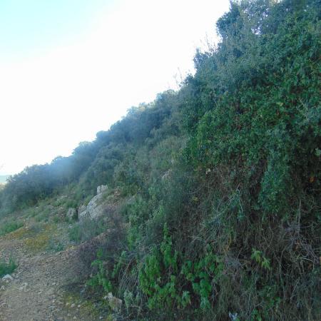 Sierra de Araceli: senderos