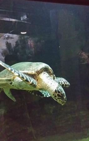 National Aquarium: A Turtle