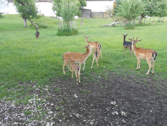 Gasthof Hotel Daimerwirt: Deer on the grounds