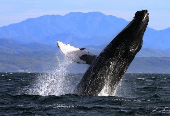 La Orca de Sayulita