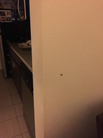 TownePlace Suites Baton Rouge Gonzales: Roach Fested!!