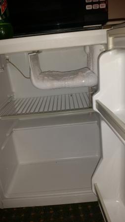 Carolyn Inn: fridge