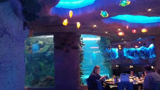 Shark Picture Of Aquarium Restaurant Nashville