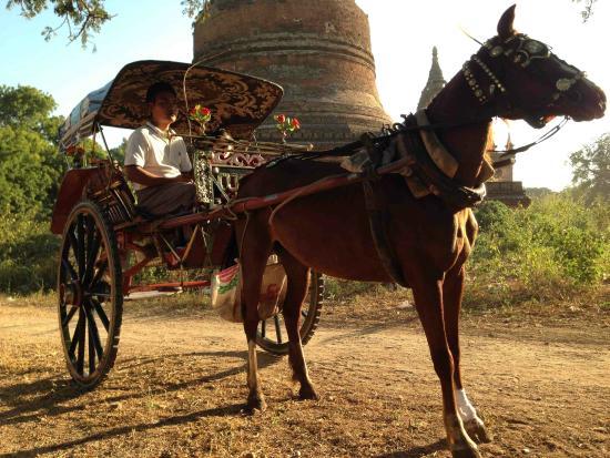 Horse Cart 144