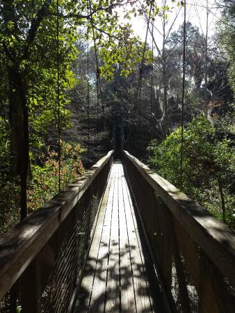 Ravine Picture Of Ravine Gardens State Park Palatka Tripadvisor