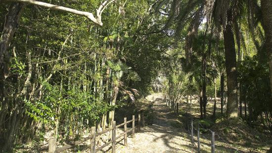 Doi Bamboo Forest