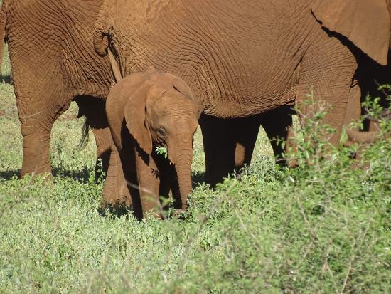 White Elephant Safari Lodge : Elefantensichtung