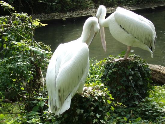 Parc Zoologique : Cormoran