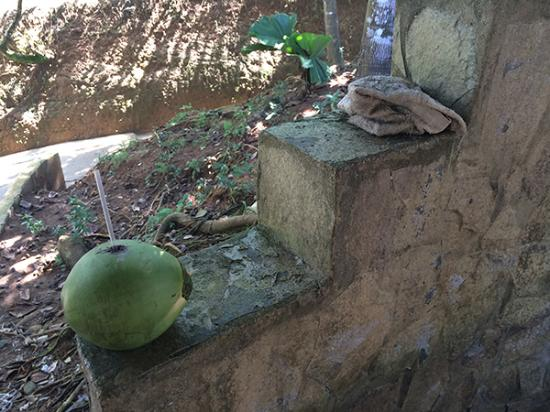 Isla Popa, Panama: These were never cleaned up from the bar area.