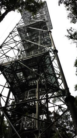 Museu da Amazonia (MUSA): A torre